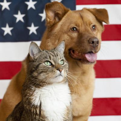 Spay & Neuter Nation Inc (Fern Park, Florida) logo dog and cat in front of American flag